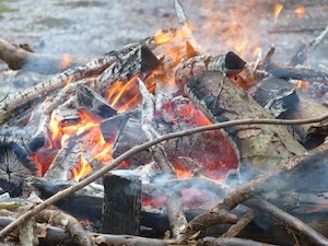 Brennholzversteigerung_2016_1